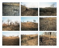 Burnt land, border - (9) 20 cm x 25 cm