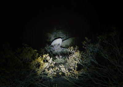 Nightwatch 3 - Californie