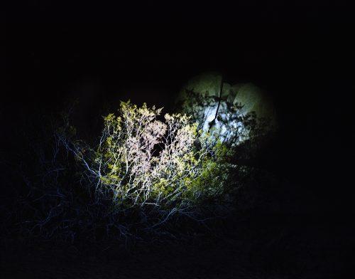 Nightwatch 4 - Californie